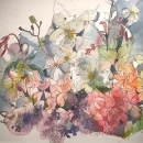 Eva Bender  Dogwood (Seattle)  watercolor 12.75 x 19.75 inches