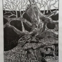 11 Gene Shaw Rocks and Trees woodcut 22.75 x 18.5 inches