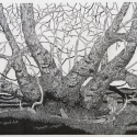 12 Gene Shaw Clump of Box Elder Trees woodcut 26.5 x 41.75 inches