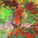 DOROTHY FREY Legacy Maple oil on canvas 12 x 12 inches $850